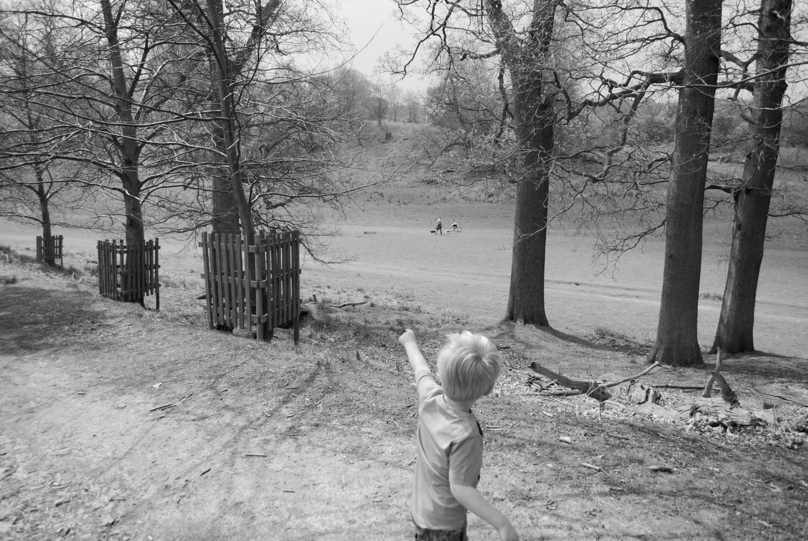 A day at Knole Park Sevenoaks