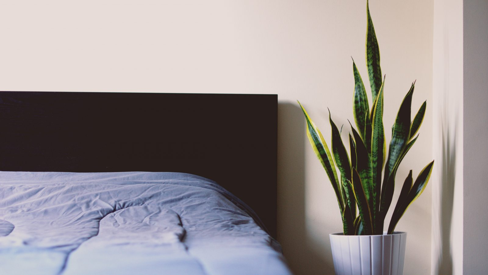 How to choose the perfect bed for you