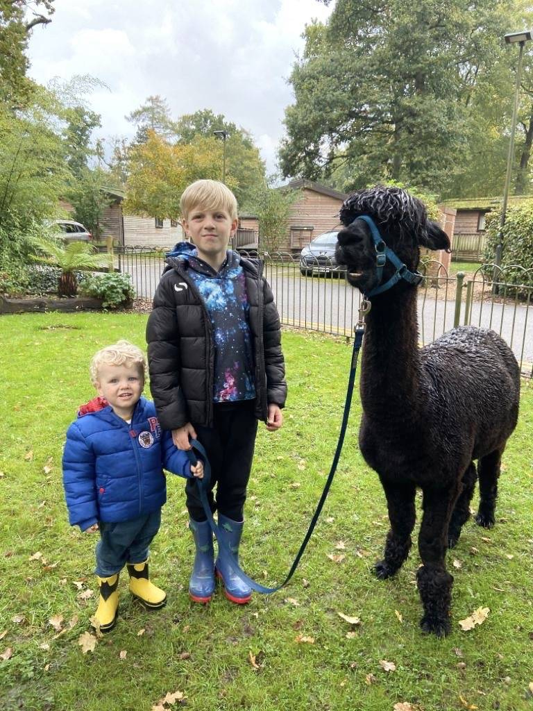 Autumn Alpaca Walks at Sandy Balls